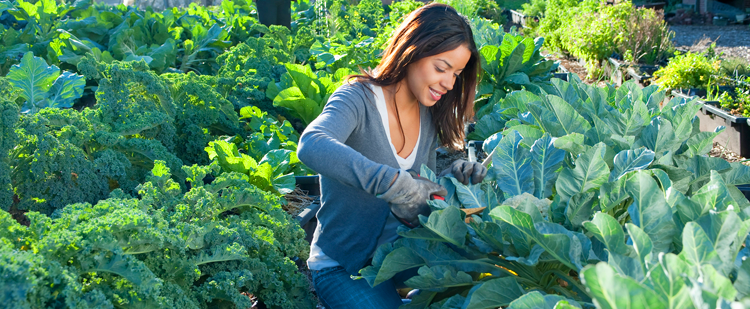 a woman kneeling and working in a vegetable garden